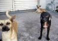 Cães de rua: várias reuniões, diligências e decisões marcam essa sexta-feira em favor da causa