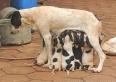 Castração de cães: em um ano, PMU fez 300 cirurgias