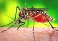 Unaí  vacinou 96% da população contra febre amarela