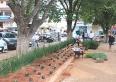 Praça JK ganha flores e mais palmeiras imperiais