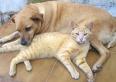Meio Ambiente inicia cadastramento de cães e gatos de Unaí