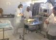 Castração de animais cadastrados na PMU: chegou a vez das fêmeas
