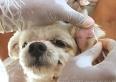 Leishmaniose canina: Município aguarda Estado enviar kits reagentes para novos testes