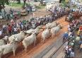 21ª Festa da Moagem de Unaí preserva a tradição do carro de bois com desfile na avenida